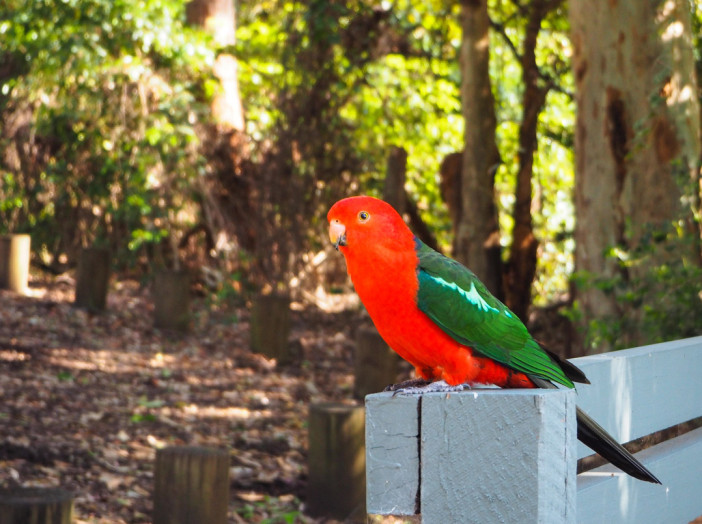red-parrot-pebbly-beach